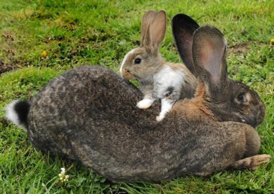 动物 兔子 550_390